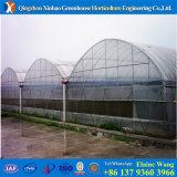 Fabrikant Gespecialiseerd in de Plastic Serre van de Boog van Grote Serre in China