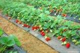 살포 - 중국 공장에서 말린 신선한 딸기 과일 주스 분말