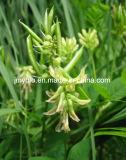 Полисахариды 70%/Astragalosides 98% выдержки корня Membranaceus Astragalus