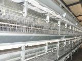 Sistema automatico della gabbia del pollo da carne del blocco per grafici di H da vendere