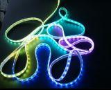 Indicatori luminosi di effetto della striscia di RGBW 4in1 LED 5050 SMD DC24V LED