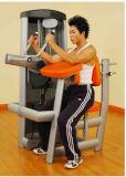 商業筋肉強さの機械によってつけられている二頭筋の拡張(XH19)