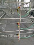 Matériel automatique de cage de poulet de ferme de couche