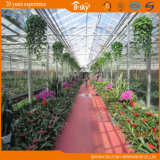 China Supplier Film Roof Glass Wall Greenhouse para Planting Vegetables