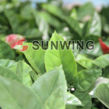 Boxwood artificiale Hedges Plastic Boxwood Hedges per Outdoor