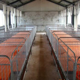 Leitão Nursery Bed e Care Beds para Pig Industry