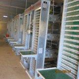 5tiers 160 tipo da capacidade H de gaiola galvanizada da camada