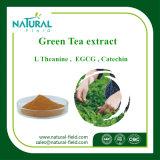 工場供給の純粋で自然な緑茶のエキスの粉EGCG 50%