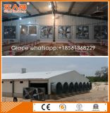 Automatische Bratrost-Geflügel-landwirtschaftliche Maschinen von der Fabrik mit Stahl-Halle-Aufbau