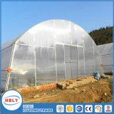 Serre chaude tropicale d'Invernadero de volaille en plastique traitée aux UV