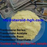고품질 건물 근육 Trenbolone 아세테이트 Trenbolone 아세테이트