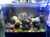 Bleu et blanc Light Spectrum Dimmable Marine Aquarium LED 72W