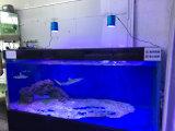 Iluminación ajustable del acuario del uso LED del filón coralino 90W
