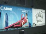 Lona illuminato, PVC Cold Laminated Banner (500dx500d 9X9)