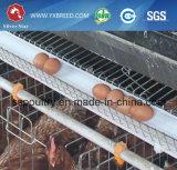 Cages de volaille galvanisées par acier pour 5, 000 - 10, oiseaux de 000 couches (A-4L120)