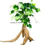 Выдержка корня Pueraria Puerarin естественная