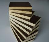 A película de Brown do Poplar enfrentou a madeira compensada para a construção
