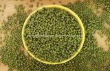 Organische grüne Mungobohnen China-mit gutem Preis