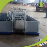 Equipamento de parada galvanizado Strengh elevado da gaiola do porco das caixas dos suínos