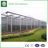 Casa verde de vidro do sistema de controlo automático para a plantação da agricultura