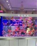 Adicional vidrio claro ultra claro de cristal de vidrio templado para el acuario y el escaparate