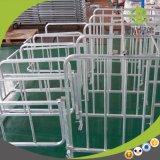 Stalle en acier galvanisée de gestation de porc de bonne qualité
