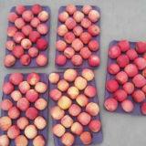 100-125 frischer chinesischer roter FUJI Apple