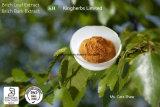 Estratto Flavonoides 5% Byuv del foglio della betulla