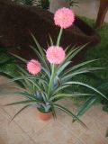 Flowers Big Ball Orchidの普及したDecorative Artificial Plants