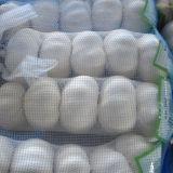 Чеснок высокого качества китайский свежий чисто белый
