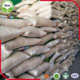 Graines de citrouille blanches de neige chinoise