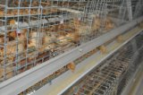 Petit (poulette) matériel de système de cage de poulet de ferme avicole