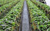 Tampa à terra agricultural preta