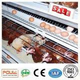 ISO9001の家禽のFramの大きい容量の層の鶏のケージ