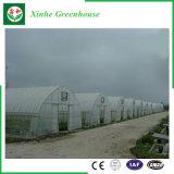 Landwirtschaft des Plastikgewächshauses für Gemüse/Blumen