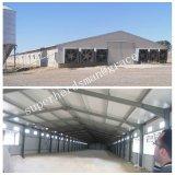 Azienda avicola della struttura d'acciaio liberata di con l'attrezzatura di produzione