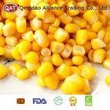 Sementes de milho doce novas da colheita com qualidade superior