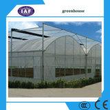 딸기 포도 나무 딸기, 농업 녹색 집을%s Multispan 갱도 온실