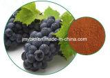 Haut-Sorgfalt-Produkt-reiner natürlicher Trauben-Startwert- für Zufallsgeneratorauszug/Proanthocyanidins und Polyphenole