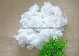 Semi fibra di graffetta di poliestere del cuscino 7D*51mm Hcs/Hc del giocattolo del Virgin