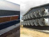 Le bétail pose des cages avec le ventilateur d'extraction pour la grande ferme