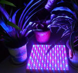 Planta de WiFi/controlo remoto e de mão do movimento do diodo emissor de luz cresce luzes com 3 anos de garantia