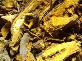 Гигантский порошок эмодина выдержки Cuspidatum Polygonum выдержки Knotweed