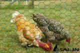 Sailinの六角形の金網の家禽は囲う