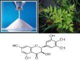 Natürlicher Rebe-Tee-Auszug mit Dihydromyricetin 98% 80% 50% 20%