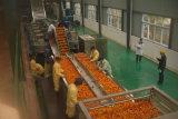 Cadena de producción del zumo de fruta del acero inoxidable equipo de proceso