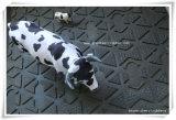 Esteira de borracha da vaca da boa qualidade com certificado Gw4002 do alcance