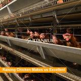 Автоматический слой оборудования цыплятины поднимая клетку цыпленка