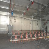 현대 작풍 Prefabricated 강철 구조물 가금은 판매를 위해 유숙한다