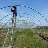 Estufa galvanizada agricultural do frame de aço